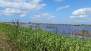Wetlands Mitigation Banking [3]